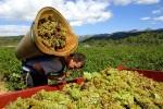 Праздник вина в Армении