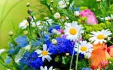flowers-herbs - 220
