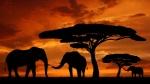 25.05_Den-Afriki